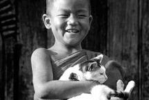= ^ . . ^ = CATS - Buddha