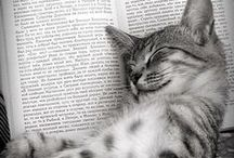 = ^ . . ^ = CATS - With Books