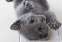 = ^ . . ^ = CATS - So Cute! 2