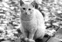 = ^ . . ^ = CATS - Autumn / Thanks