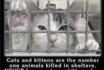"""= ^ . . ^ = CATS - Sad Reminder/ Euthanasia / This board is posted for one reason to make you angry.... ARE YOU ANGRY!? WELL DO SOMETHING ABOUT IT, ADOPT - DONATE - FOSTER - START YOUR OWN RESCUE - START A TNR """"TRAP NEUTER RETURN"""" PROGRAM IN YOUR COMMUNITY.  You have the ways and the means to change this for your local shelter/pound cats & kittens. MAKE A DIFFERENCE - MAKE A CHANGE - SAVE SOME LIVES!!!  I did something, I started my own cat rescue - Coastal Carolina Feral Cats TNR & Rescue -"""