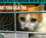 TNR - Coastal Carolina Feral Cats / TRAP NEUTER RETURN