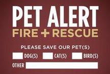 = ^ . . ^ = CATS - Emergency/Help