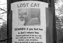 = ^ . . ^ = CATS - Microchip ~ Lost