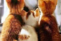 = ^ . . ^ = CATS - Orange