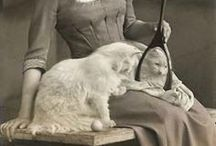 = ^ . . ^ = CATS - w/Women
