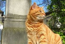= ^ . . ^ = CATS - Guardians