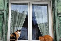 = ^ . . ^ = CATS - In Windows