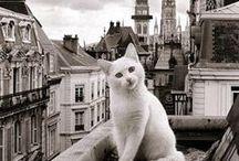 = ^ . . ^ = CATS - Around The World