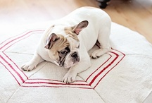 French Bull Dogs / by Elizabeth Raterman