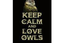 Owl Love <3 / by Loretta Thomas