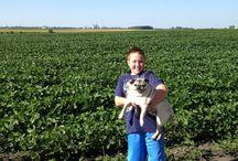 MN Farm Girl / I was born and raised on a Minnesota farm. It's who I am - a farm girl.