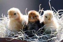 animals/birds I adore / by Amanda White