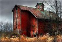 You Left Your Barn Door Open / by Deb Saine