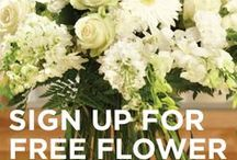 Flower Thoughts by J / Sign Up for J's Free Flower Thoughts... delivered FREE To your Mailbox Monday-Friday... Tips, Tricks, and Hints for Flower Arranging... plus Inspiring and Creative Flower ideas... sign up here:  www.eepurl.com/hS4aE