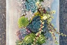 Succulents / Succulent plants and fun ideas for creating things with Succlents!