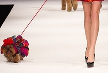 Le Chien - #FWEP 2013 / Fashion Week El Paseo™ presents the second annual Le Chien Couture Fashion Show, Saturday, March 16, 2013. Expect to see large and small, pedigree and mutt strutting their stuff on the Fashion Week runway in the Big White Tent. The doggie models will all be decked out in the latest spring fashions by dog couture designer Linda Higgins.