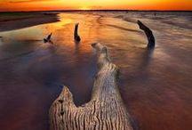 Nature / by Julie Sincennes