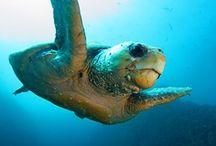 Marine Life / by ★Bianca Eckert ★