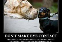 Petsopedia.com  - Funny Pet Quotes / Petsopedia.com  - A place for pet lovers!