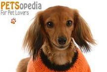 Petsopedia Greetings / Greetings From PETSopedia
