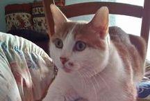 Gatti / Una #famiglia di #gatti e le loro vite