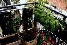 Balcony / indoor gardening