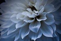 Great Flower ♡ / ♡