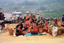 Reizen naar Vietnam / Vietnam is veelzijdig. Rijstvelden en kleurrijke lokale bevolking in het noorden, karstgebergte in Halong Bay, tropische stranden, Franse koloniale architectuur,ruïnes uit de Cham periode en uiteraard het heerlijke Vietnamese eten. Deze tropische bestemming in Zuid Oost Azië heeft het allemaal!