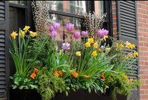 Planting a Window Box