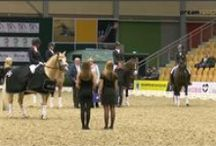 #JBKHORSESHOW2015, #tvdreamsports, #tacktalks / Photo impressions and Snippets from The JBK Horse Show 2015 Odense.