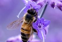Bee & Butterfly Friendly Gardens / With British bees and butterflies in decline, it's more important than ever that we plant more specifically for wildlife in our gardens. There are so many attractive plants that provide precious nectar for pollinating insects. We've collected some ideas here...