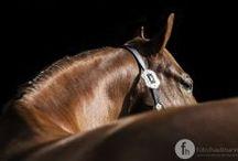 equine photography / Pferde sind faszinierende Tiere. Mit der Fotografie hat man die Möglichkeit, genau diese Faszination festzuhalten. Kraft, Ausdruck und Emotionen auf den Punkt gebracht.