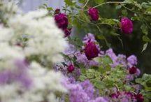 garden de lux