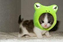 cuties animal