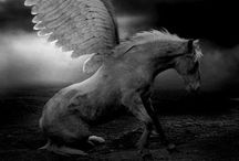 Pegasus / Winged horse, created from the blood of Medusa, that opened the spring of Hippocrene with a stroke of its hoof, and that carried Bellerophon in his attack on the Chimera.