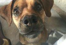 Amiguitos especiales / Imagenes de mi perro Giro y sus amiguitos