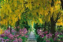Gardening - allees & arches