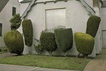 Gardening – topiary