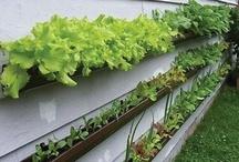 Gardening ideas / by Debra Marr