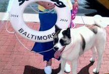 Dog Friendly Baltimore / Coming to Baltimore, Maryland, for the weekend with man's best friend? Eat, stay, and play with your dog at these venues!