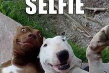 C U T E  A N I M A L S / Cute animals, dogs, cats and etc