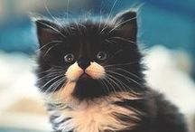 I ❤ cats / Kittens and cats, i love them all! ❤️
