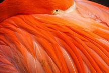 Oranges / Colours
