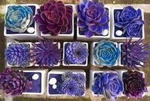 Mexican Style Garden / Cactuses, succulents, big pots and vibrant colours ideas for Mexican or tropical garden style.