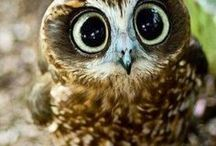 Owls / About those marvelous creatures with huge eyes.