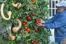 Garden - Tips & Tricks