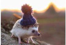 Des Chapeaux et des Animaux
