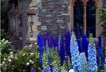 Garden - Cottage Garden