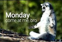 Come on Monday... hit me with your best shot! / by Zulu Nyala